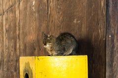 严重的猫 免版税库存照片