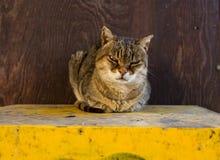 严重的猫 免版税图库摄影
