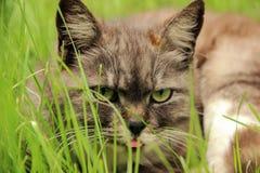 严重的猫 库存照片