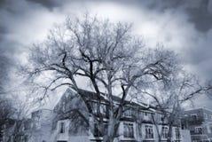 严重的结构树 图库摄影
