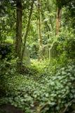 严重石头在公墓- 1 库存照片