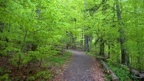 个人透视走在一条道路在绿色森林里,平稳的凸轮射击 走在足迹的徒步旅行者Pov通过森林 股票录像
