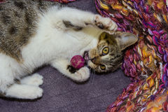12个在篮子的星期年纪小猫 库存照片