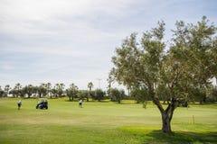 18个孔有高尔夫球运动员和橄榄树的高尔夫球场在西班牙 图库摄影