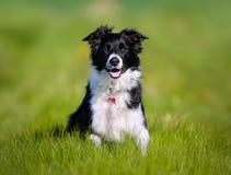 3 4个小猎犬狗纯血统的动物查阅 图库摄影