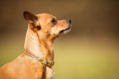 3 4个小猎犬狗纯血统的动物查阅 免版税库存图片