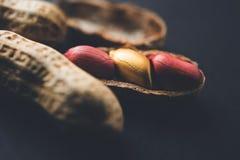 个性、运气、价值、排他性和更好的选择的概念 金黄花生或花生,引人注意在正常peanu中 免版税库存图片