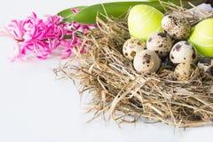 2个所有时段小鸡概念复活节彩蛋开花草被绘的被安置的年轻人 干草桃红色风信花和巢用在白色背景的鹌鹑蛋 免版税库存照片