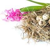 2个所有时段小鸡概念复活节彩蛋开花草被绘的被安置的年轻人 干草桃红色风信花和巢用在白色的鹌鹑蛋 关闭 图库摄影