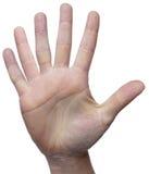 6个手指 库存图片