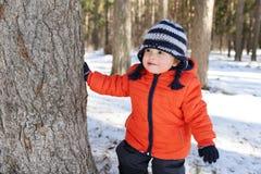 18个月在树后的婴孩皮在森林里 免版税库存图片