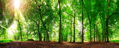 360个森林太阳 库存照片