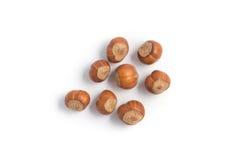 整个榛子种子 免版税库存照片