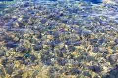 100个清楚的颜色极大的iso红海水 库存照片