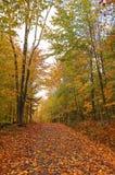 4个秋天横向 图库摄影