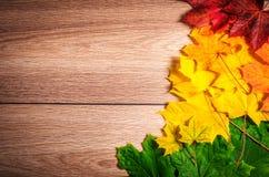9个秋天颜色 免版税库存照片