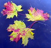 9个秋天颜色 免版税库存图片