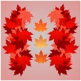 9个秋天颜色 库存照片