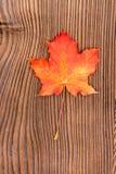 9个秋天颜色 免版税图库摄影