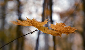 9个秋天颜色 库存图片