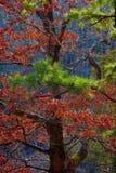 2个秋天结构树 库存图片