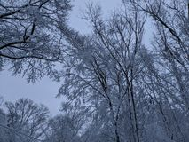 26个综合数字式巨大的mpix全景射击范围多雪的结构树 库存照片