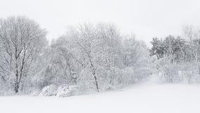 26个综合数字式巨大的mpix全景射击范围多雪的结构树 图库摄影