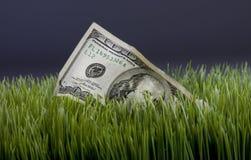 在绿草的美元 免版税库存照片
