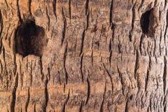 12个背景中心重点grunge mp有选择性的木头 免版税库存照片