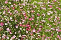 1个背景开花粉红色 免版税图库摄影