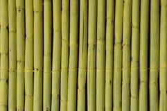 10个背景竹eps例证向量 图库摄影