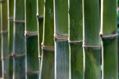 10个背景竹eps例证向量 免版税库存照片