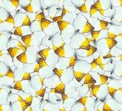 10个背景蝴蝶eps向量 免版税库存图片