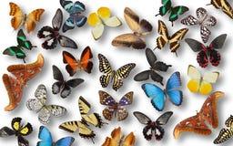 10个背景蝴蝶eps向量 免版税库存照片
