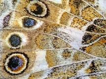 10个背景蝴蝶eps向量 免版税图库摄影