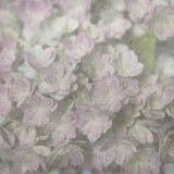 10个背景eps模式紫色向量葡萄酒墙纸 库存照片