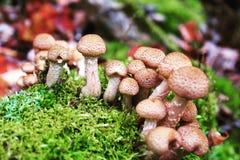 2个蘑菇 免版税库存照片