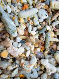 4个螃蟹隐士 免版税库存照片