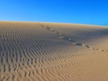 45个被采取的沙漠沙丘沙丘脚印纳米比亚最旧的沙子其中世界 免版税库存图片