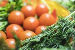 10个西红柿用荷兰芹和莳萝 对角框架 免版税图库摄影