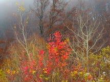 1个颜色秋天 图库摄影