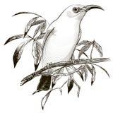 3个鸟动画片例证系列向量 板刻例证 免版税库存图片