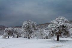26个综合数字式巨大的mpix全景射击范围多雪的结构树 免版税库存照片