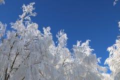 26个综合数字式巨大的mpix全景射击范围多雪的结构树 免版税图库摄影