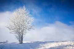 2个结构树冬天 图库摄影