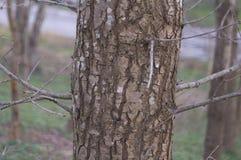 10个结构树 免版税库存照片