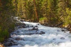 3个hdr图象山全景河垂直 快速的小河水 俄罗斯阿尔泰 免版税库存图片