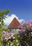 中世纪塔、一部分的城市墙壁和开花的丁香 库存照片