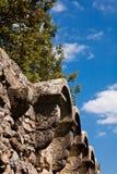 中世纪墙壁和树 免版税库存图片