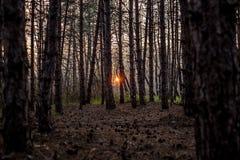 中产阶级的森林 免版税库存照片
